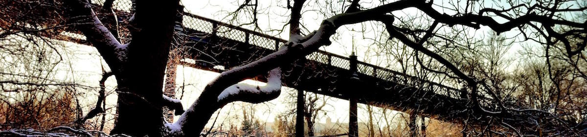 Winter in the Dene